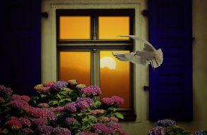Toronto az elsõ város, mely madárbaráttá teszi az épületek ablakait