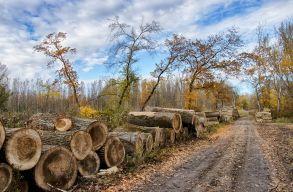Felszólította az Európai Bizottság Romániát, mert nem ellenõrzi elég hatékonyan a fakitermelést