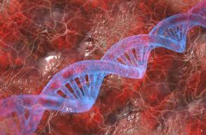 Nem a szülõk génjein múlik, hogy milyen nemû gyerekek születnek egy ausztrál kutatás szerint