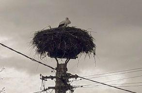 Visszaérkeztek az elsõ gólyák Erdélybe
