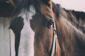 Nyilatkozat nélkül mentek lovat lopni, meg is kapták érte a bírságot