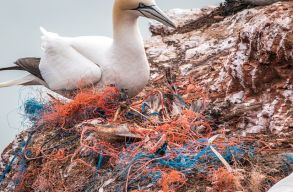 Egyre több mûanyag szennyezi a szubantarktikus szigeteket
