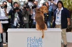 A némafilmes kutyája nyerte a jubileumi kutyasztár-versenyt