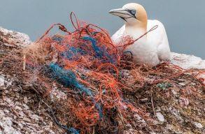 Elõször találtak mikromûanyagot ragadozó madarakban