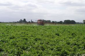 Románia lehet az új kapu az EU-ba áramló illegális rovarirtó szerek számára