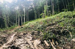 Látványos pusztítást végeztek a Néra-szurdok Nemzeti Parkban, de állítólag legálisan