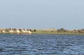 Soha nem fotóztak még ennyi flamingót az ország területén