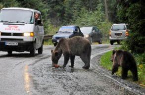 Környezetvédelmi miniszter: Meg kell bírságolni a medvéket etetõ személyeket