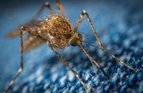 Szakértõ: ne akarjuk, hogy egyáltalán ne legyenek szúnyogok, mert akkor más fajok is eltûnnének