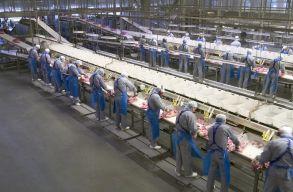 A legnagyobb európai sertésfeldolgozó egyik gyára is leállt Dániában