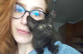 """""""Hogy ne legyen szenvedés az utcákon"""" – program indult a macskákért Szatmárnémetiben"""