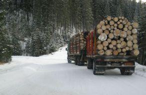 Választási látványintézkedésnek tartja a szakértõ az erdészeti törvény módosítását