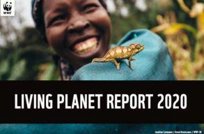 Élõ Bolygó jelentés: megdöbbentõ, mennyire lecsökkentek a gerinces fajok populációi