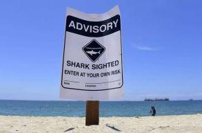 Rekordszámú cápát figyeltek meg Dél-Kalifornia partjainál