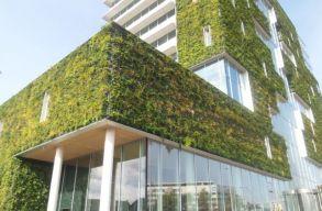 Léteznek jó megoldások városzöldítésre, a kulcs azonban a mentalitásváltás