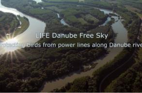 Nemzetközi programmal védik a madarakat a nagyfeszültségû távvezetékek által okozott balesetektõl