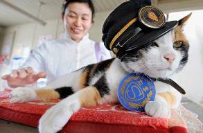 �llom�sf�n�kb�l istenn�v� avanzs�lt egy jap�n macska