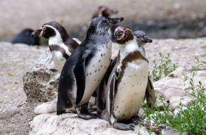 Miért ennyire elterjedt az állatvilágban a homoszexualitás és mennyiben örökölhetõ?