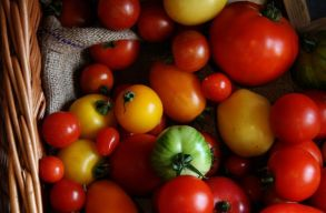 Ezrével tûnnek el a régi zöldségfajták. Magbankok és parasztszervezetek mentik, ami menthetõ