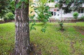 Mit kell tudni a sepsiszentgyörgyi tömbháznegyedekben lévõ fák kivágásáról, ültetésérõl?