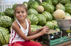 A romák sérülékenysége: iskola és munka