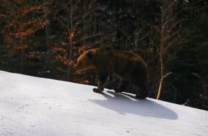 """Medvével """"versenyzett"""" egy sízõ Predeálon"""