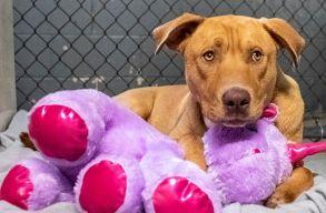 Ötször próbálta ellopni, végül megkapta ajándékba a plüss játékot egy kóbor kutya