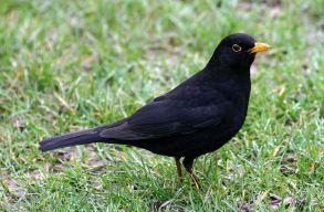 Milyen madarak szólnak ebben az idõszakban? És mit tehetünk, ha segíteni szeretnénk nekik?