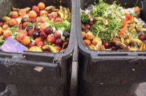 Jövedelmünk jelentõs hányadát élelmiszerre költjük, mégis fejenként 130 kiló élelmiszert dobunk a kukába
