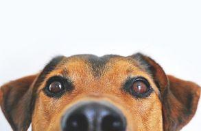 Az Egyesült Királyságban törvénybe foglalják, hogy a gerinces állatoknak vannak érzelmeik