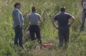 Medvét gázoltak el Kolozs megyében, a sérült állatot el kellett altatni