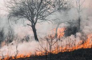 Hat hektáron pusztít a tûz a Vaskapu-szoros Nemzeti Parkban
