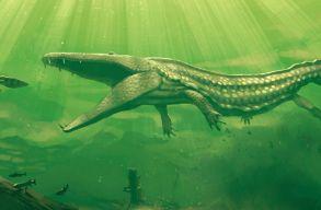 7 méteres, 230 millió éves õsi krokodil állkapcsát találták meg Németországban