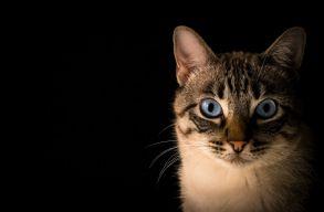 """5 év börtönre ítélték a """"brightoni macskagyilkost"""""""