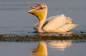 PETlican-projekt: madárlesre viszi a Duna-deltában a pillepalack-gyûjtõket a SOR
