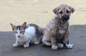 140 kutyát és 60 macskát menekítenek ki a britek Afganisztánból