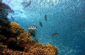 70 év alatt elvesztettük a korallzátonyok felét