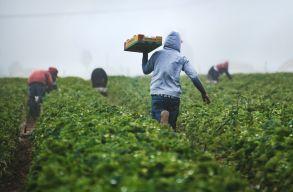 Megreformálná a világ élelmezését az ENSZ. A termelõk viszont bojkottálják a csúcstalálkozót