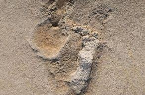 Hat millió éves emberi lábnyomokra bukkanhattak a tudósok