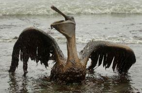 Rekordm�ret� k�rt�r�t�st fizet a BP a Mexik�i-�b�lben t�rt�nt olajkatasztr�f��rt