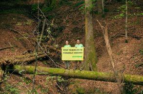 Greenpeace: a Vidraru-t� k�rny�ki �rintetlen erd�k 38,3%-�t letarolt�k