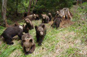 Bajban van a medvebocs-visszavad�t� k�zpont