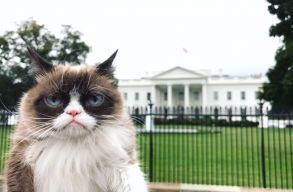 Musicalszt�r lesz Grumpy Catb�l: term�szetesen a Macsk�kban j�tszik