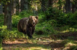 Hivatali visszaélés gyanújával nyomoz az ügyészség a vadászati kvóták ügyében