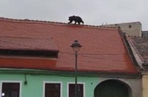 Medvebocsot gyilkoltak le Nagyszebenben