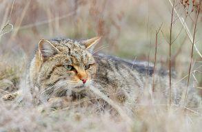 WWF: 1691 v�dett vad�llat lel�v�s�t tervezi a k�rnyezetv�delmi miniszt�rium
