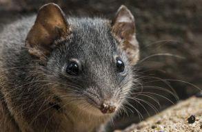 Szakértõ: több faj kihalását is okozhatta az ausztráliai tûzvész